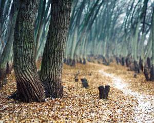 Path between -1-