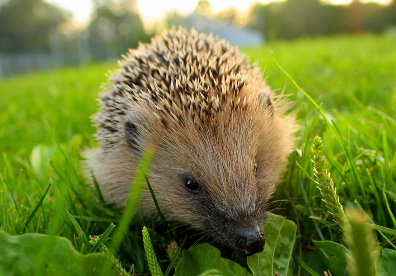 Igel by MarlenaLphotography