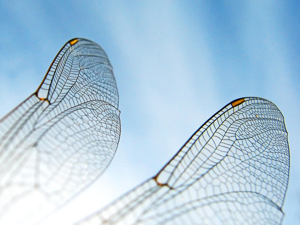 dargonfly wing by NicoW92