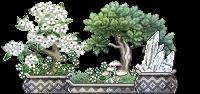 bonsai_aarresi_1_by_auricolor-danjnay.png