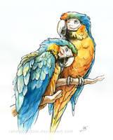 Macaws by Rahmschnitzel