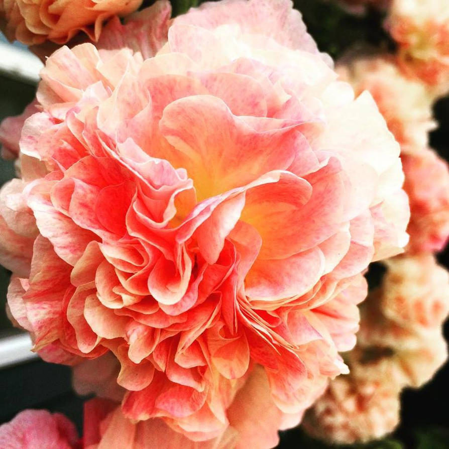 Flower Garden3 2015 by MiniSkirtRoy