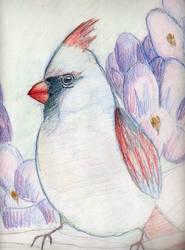 Cardinal by FelldohTheSquirrel