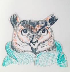 Caleb the Owl