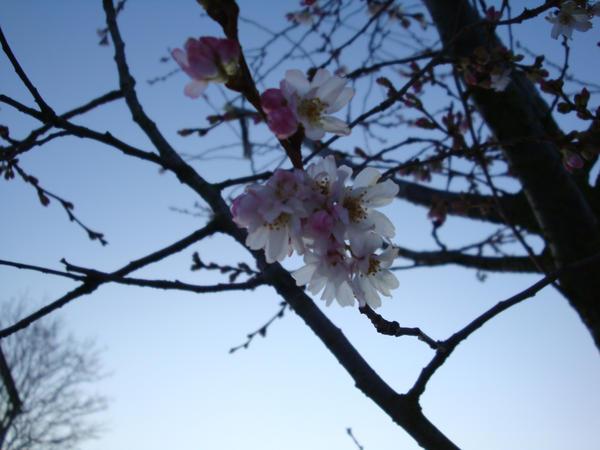 simple beauty 2 by pinkOrchidea