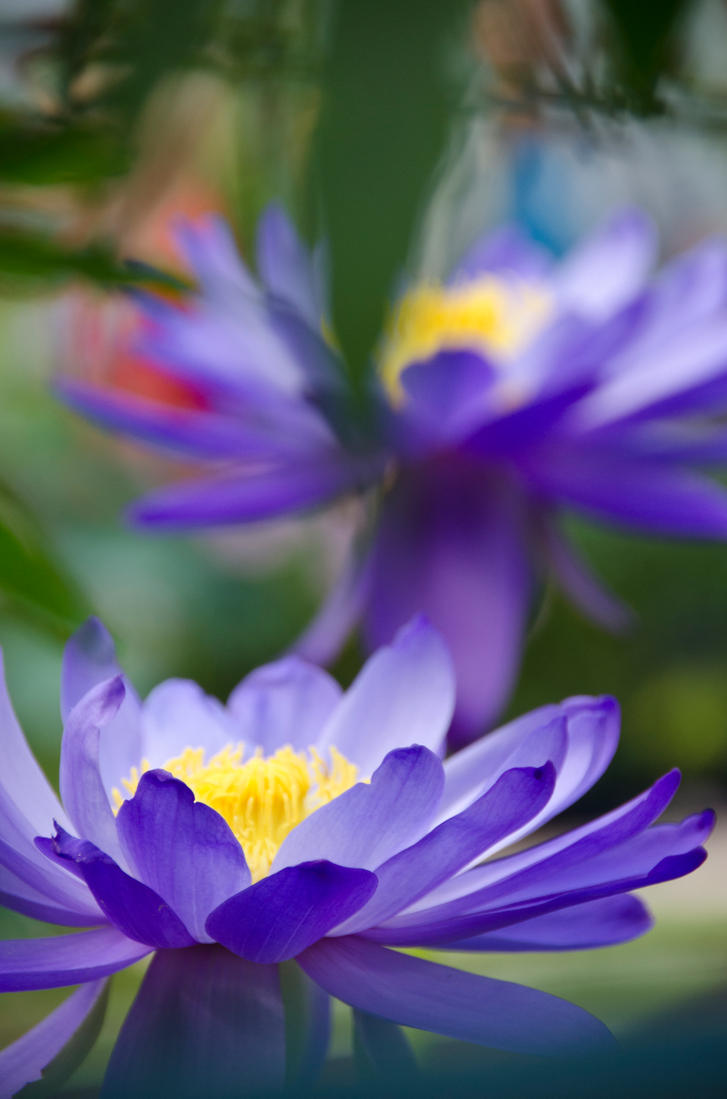 At the Waterlily House by GuadianAngel
