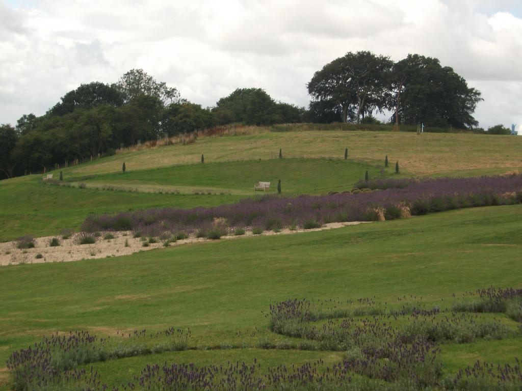 Lavender Garden by Fran48