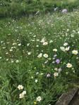 Scattered flower fields..