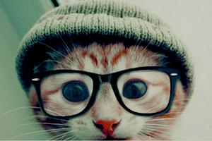 Cat by Monsterka112