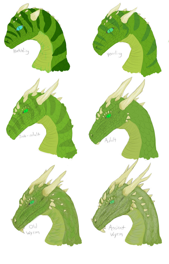 Study: Dragon Aging by GalanorBrighteye