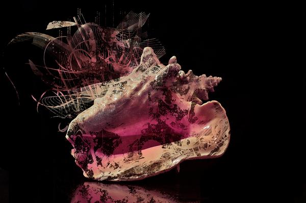 Explosive Shell by michellemonique