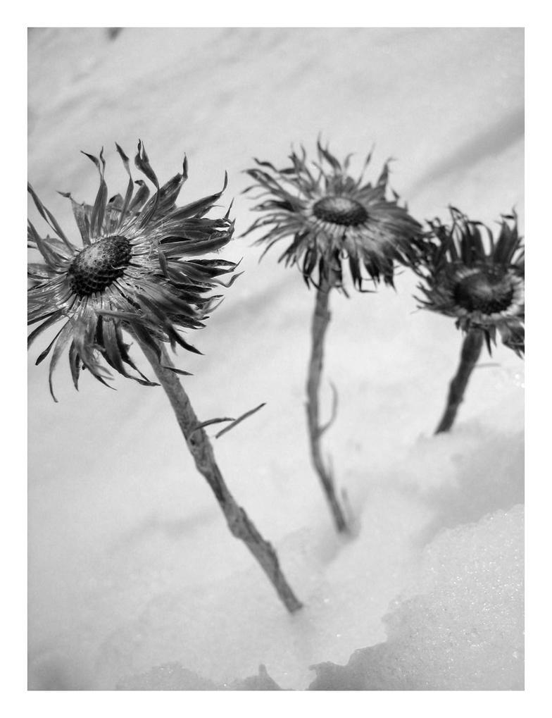 clipart dead flowers - photo #40