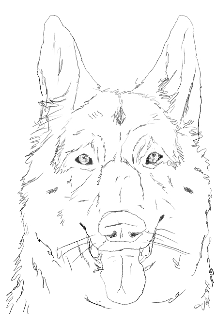 Draw A German Shepherd Face How To Draw A German Shepherd Puppy