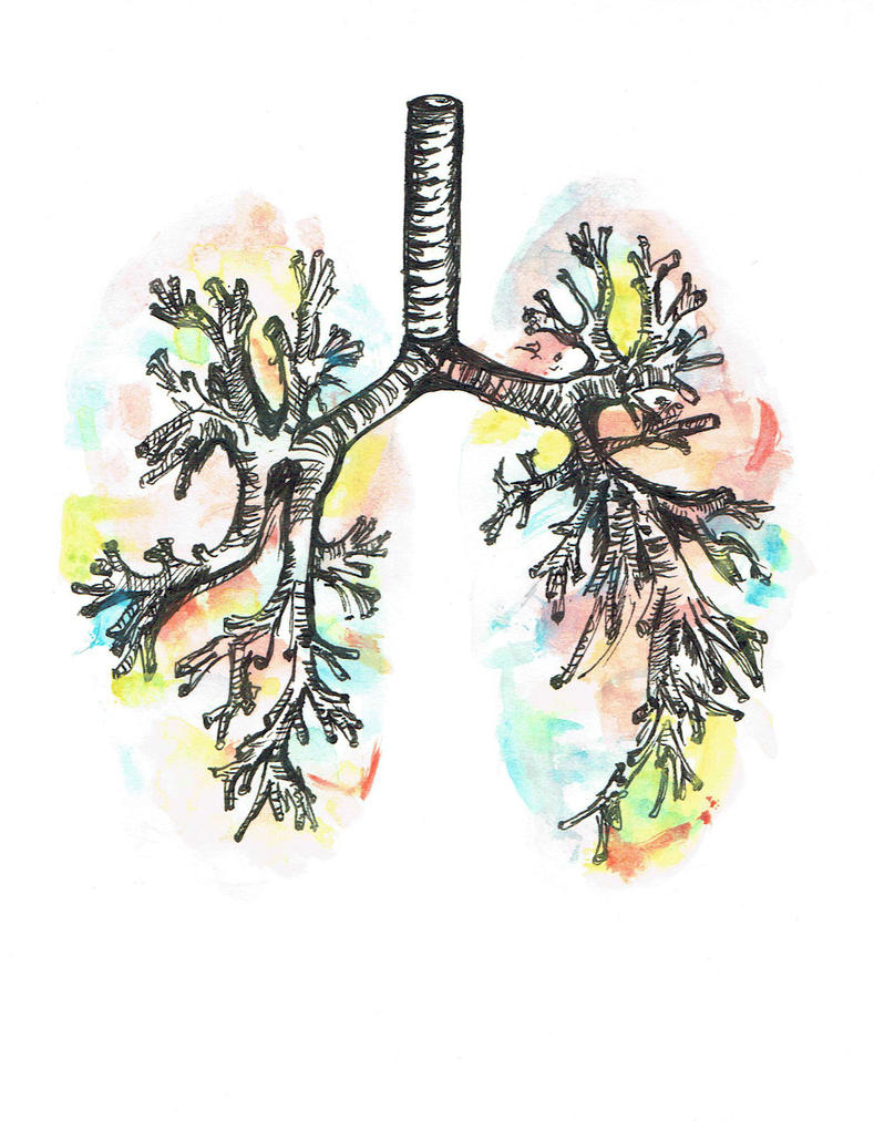 Watercolour Anatomy: The Lungs by chemical-adventures on DeviantArt