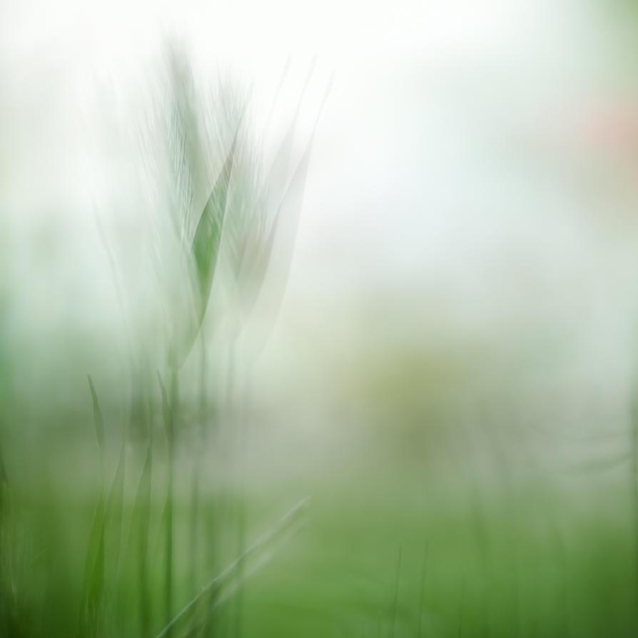 188/365 Grass by niskoristi