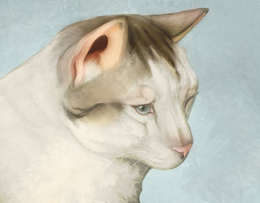 cat study