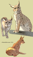 Lynx Cat Studies