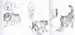 More wolves!