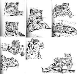 Snow leopard sketches 2