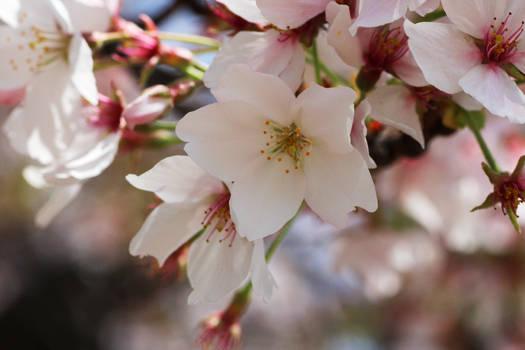 Kyoto - Spring