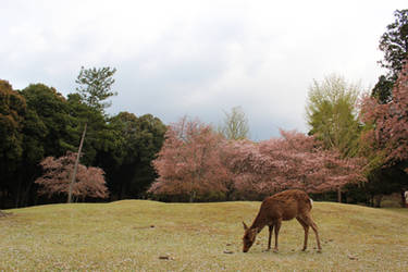 Kyoto - Nara II