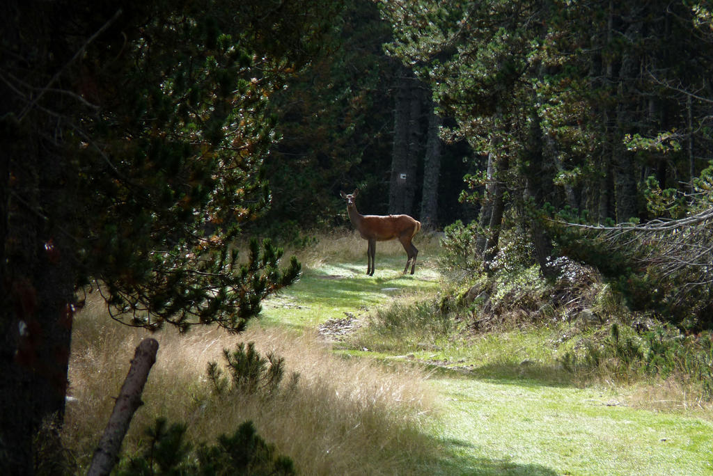 Deer by Nebruban