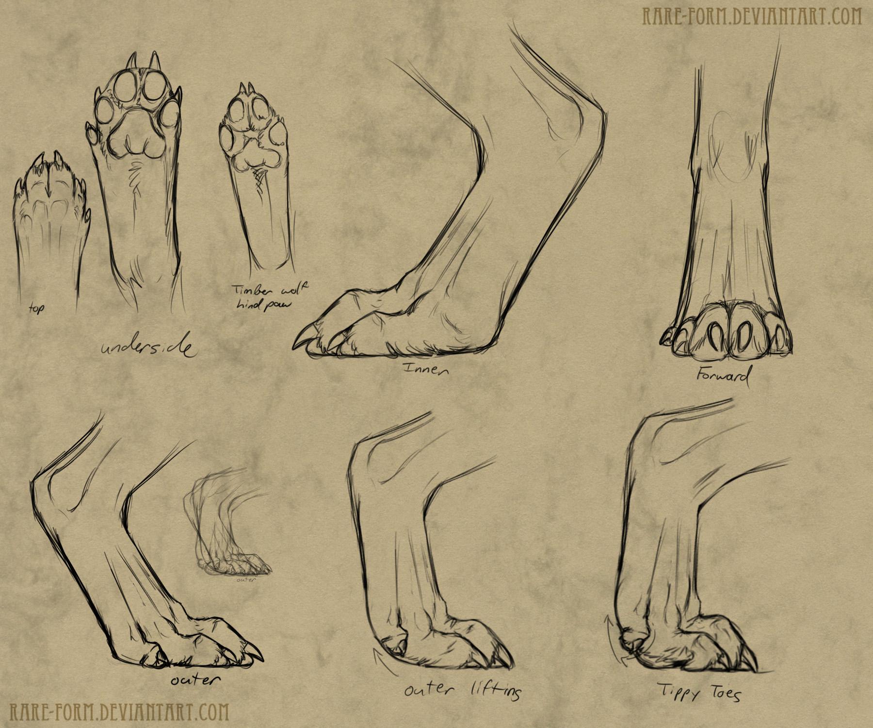 Real Dog Paws Anatomy