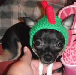 A Yoshi hat for my Yoshi 2