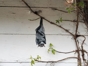 In This Together - Alley Art Bat