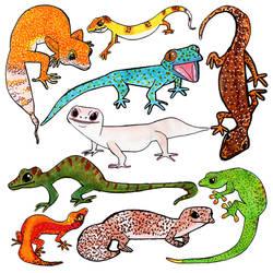 Geckos by Torsle