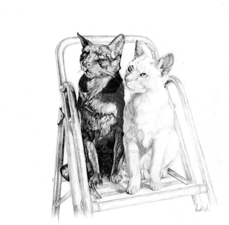 More Cats by Ramelia-Images