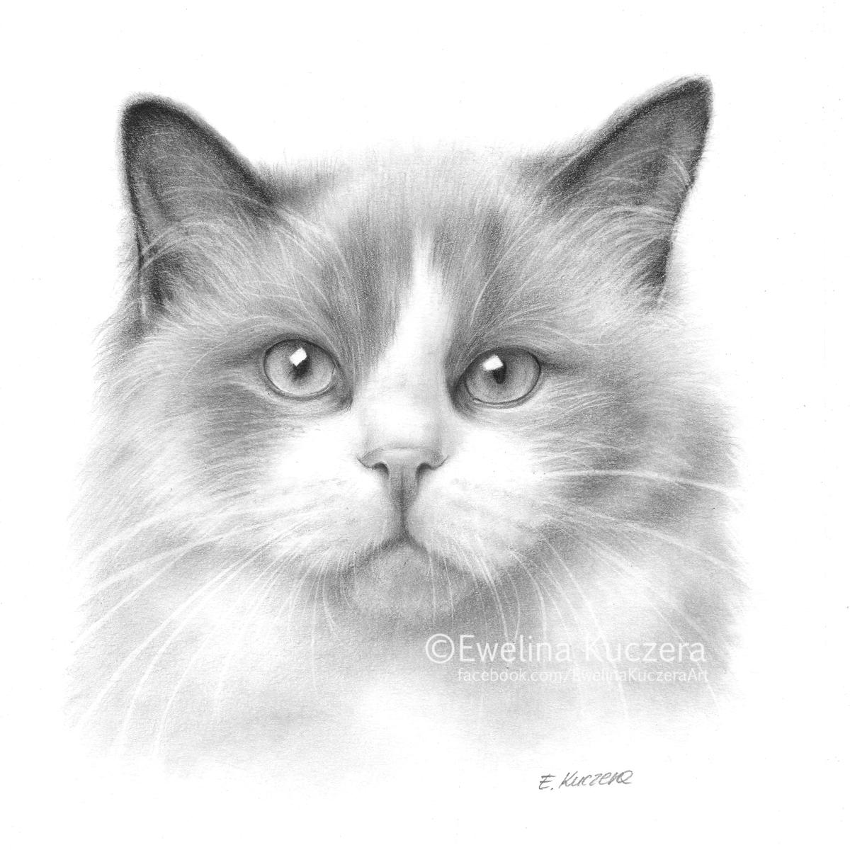 Cat pencil drawing by Kot-Filemon on DeviantArt