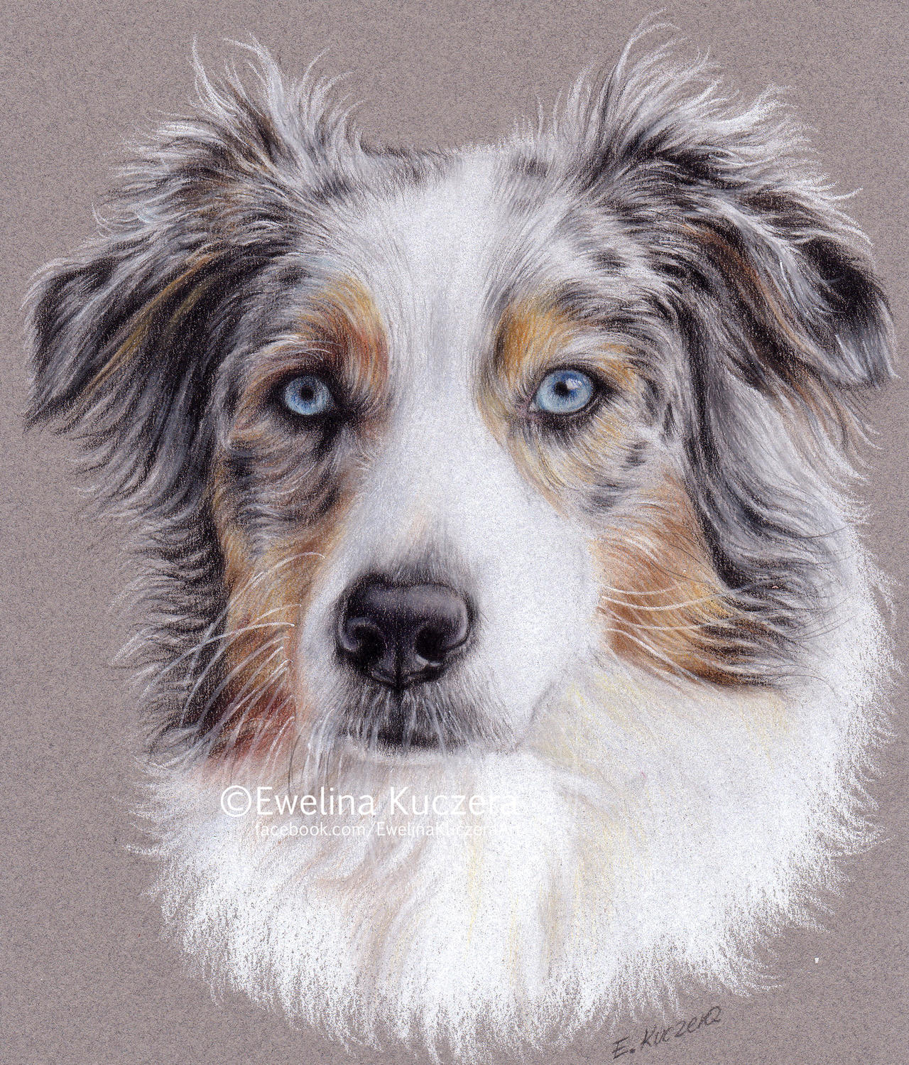 Blue Eyed Dog Clip Art