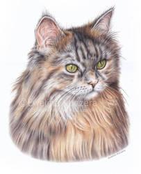 Cat portrait by Kot-Filemon