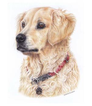 Dog Portrait by Kot-Filemon