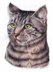 Cat - colored pencil portrait by Kot-Filemon