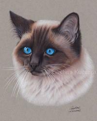 Siamese Cat colored pencil drawing by Kot-Filemon