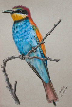 Bee Eater - colored pencil drawing