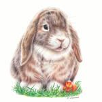Bunny - colored pencil drawing by Kot-Filemon