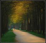 Walking on the winner' s lane by Esperimenti