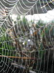 spider's web 7 by RTyStock