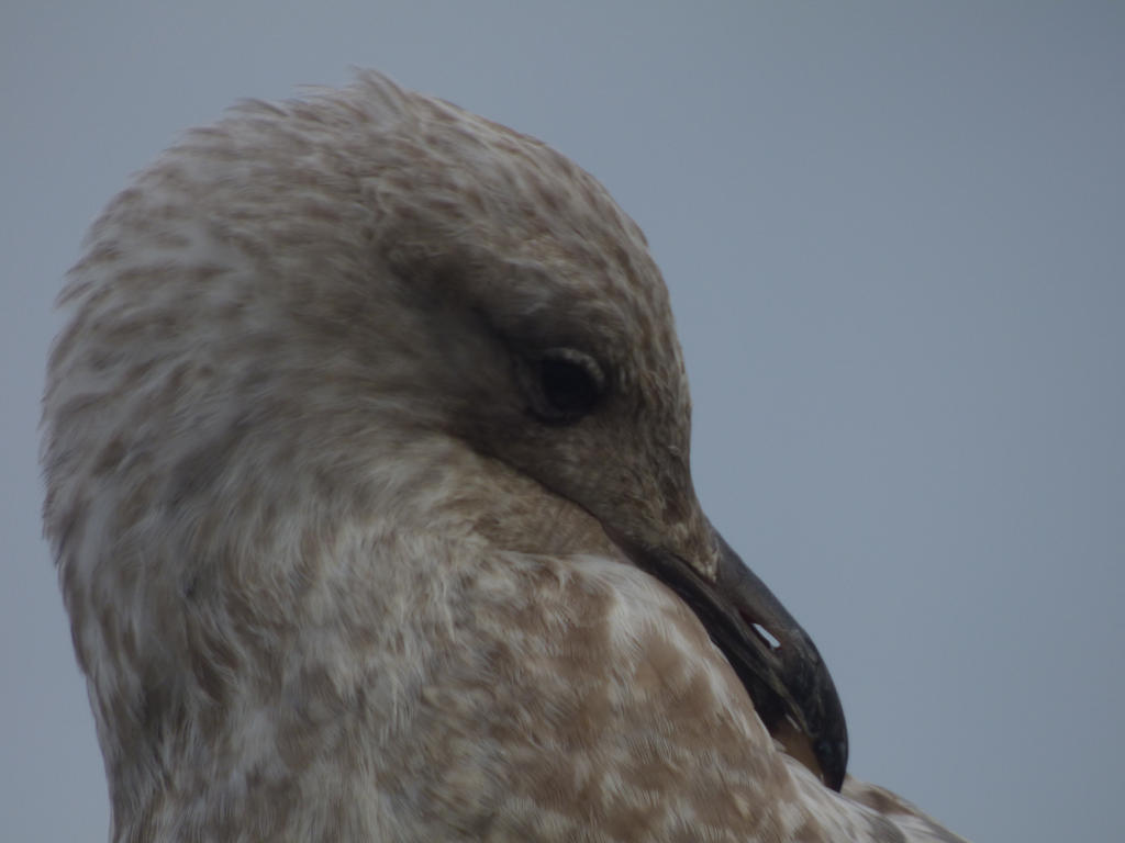 Seagull by Valdkynd