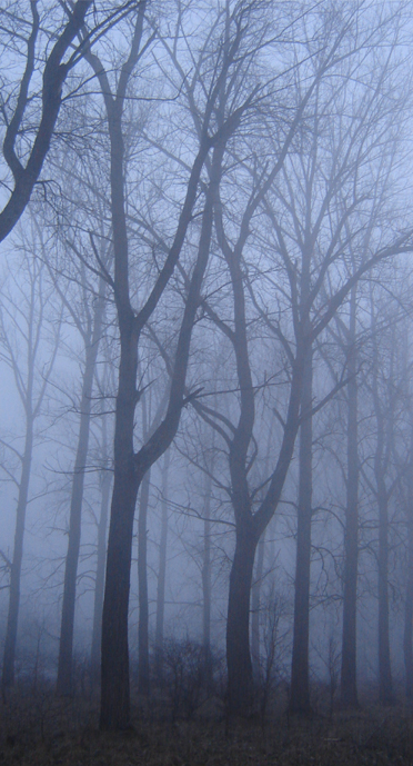 fog 2... by Valdkynd