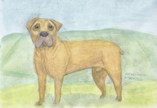 Docker the Boerboel