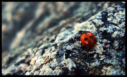 Ladybug by CityLover
