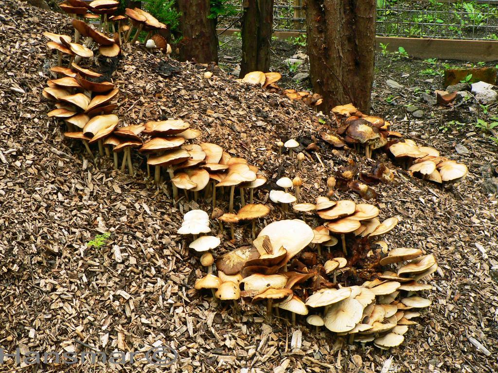Fungus by Hansmar