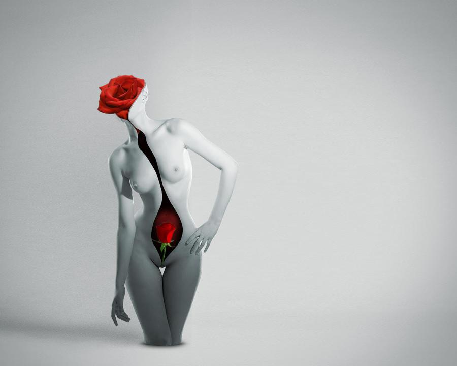 Rose by Lintza