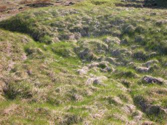 Iceland - 82 - Grass