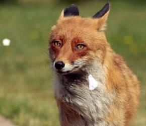 Mykytundel the Fox II by LiwenQ