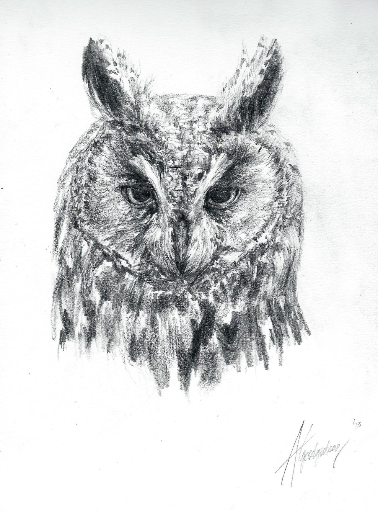 long eared owl sketch by swimdude002 on deviantart